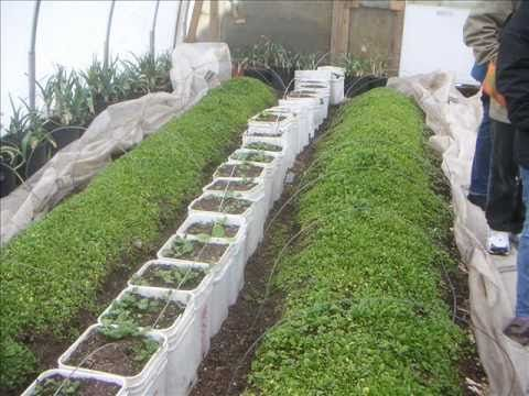 YOU can grow in the winter time - in the snow!  After watching this video you will know how you can grow in the snow.  You will also learn more about what they are growing at Will Allens place - Growing Power.