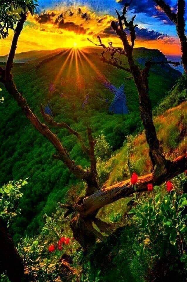 Belle Nature Photographe Nature Belle Nature Image Nature