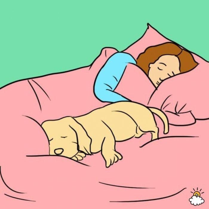 faire dormir son chien avec soi dans son lit c est loin d tre une aberration pour beaucoup de. Black Bedroom Furniture Sets. Home Design Ideas