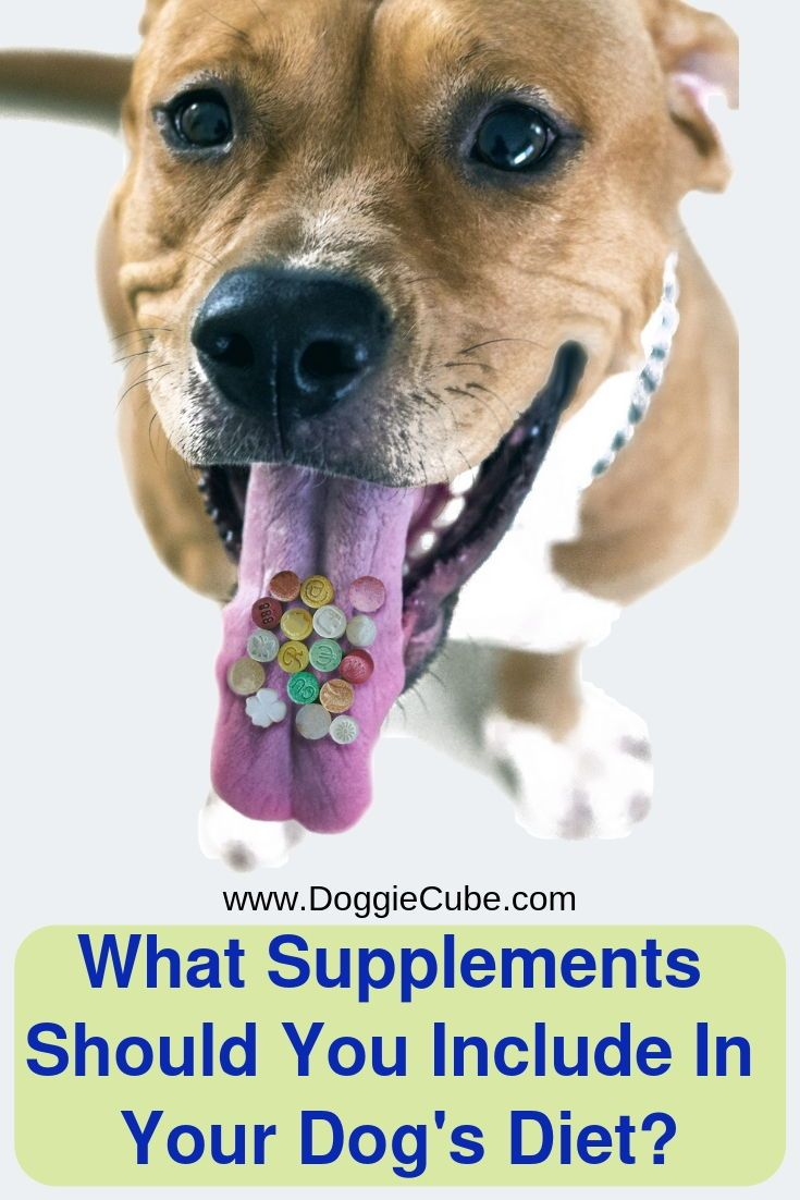 What Supplements Should You Include In Your Dog S Diet Doggie Cube Dog Diet Healthy Dog Food Recipes Healthy Dogs