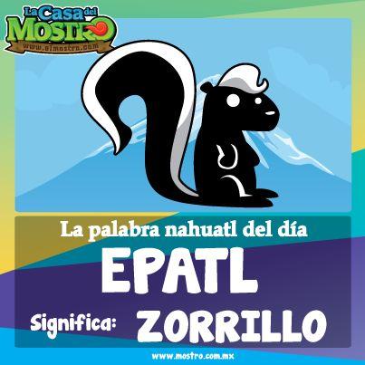Epatl significa Zorrillo en nahuatl