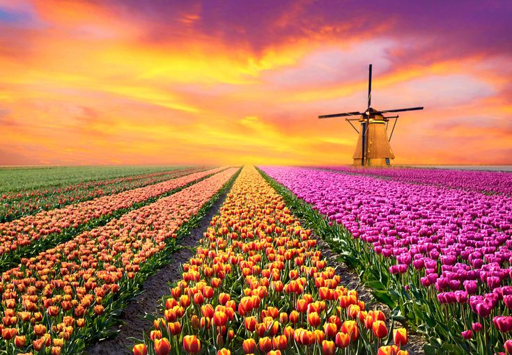 8 IMAGINI CARE NE DEMONSTREAZA CA MAMA NATURA NU ARE NEVOIE DE PHOTOSHOP (flowers, tulips, travel)