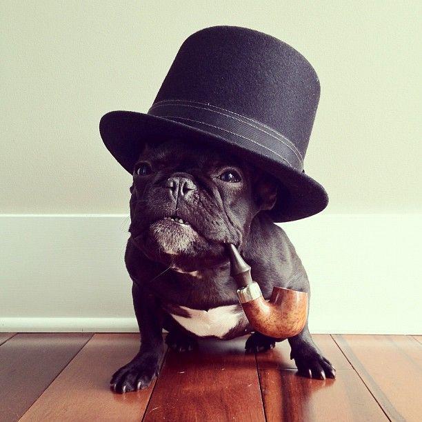 .Funny Dogs, French Bulldogs, Like A Sir, Sherlock Holmes,  Ten-Gallon Hats, Cowboy Hats, Winston Churchill, Dogs Portraits, Tops Hats