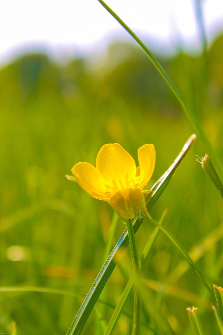Yellow Flower by Barbara  on 500px