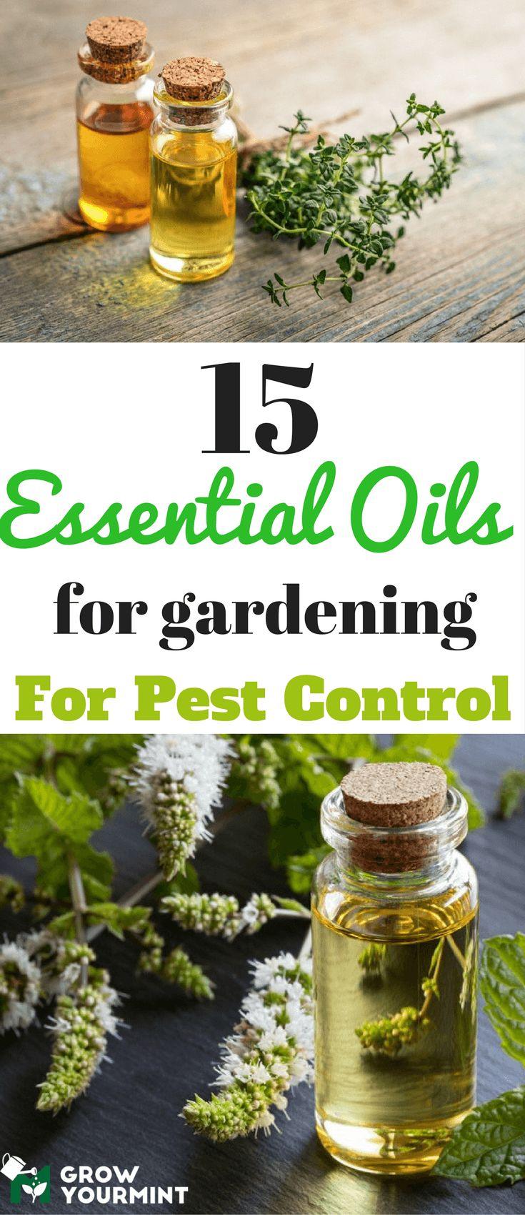 15 essential oils for gardening for gardening for pest control  #gardens#pest#growyourmint