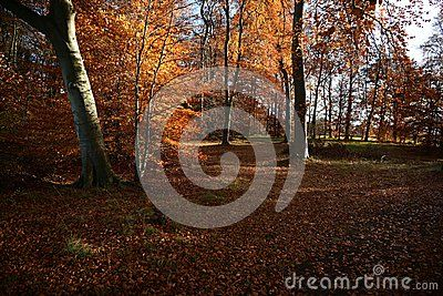 Autumn fantastic colors of the leaves, park, rest, beautiful sunny weather giving the colors of autumn, green grass is contrasting with the yellowing leaves, reflection of the tree in the wate