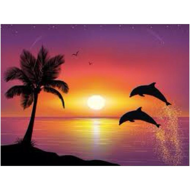 Sunset With Dolphins Shots Hehe I Wuv Dolphin Sunsets
