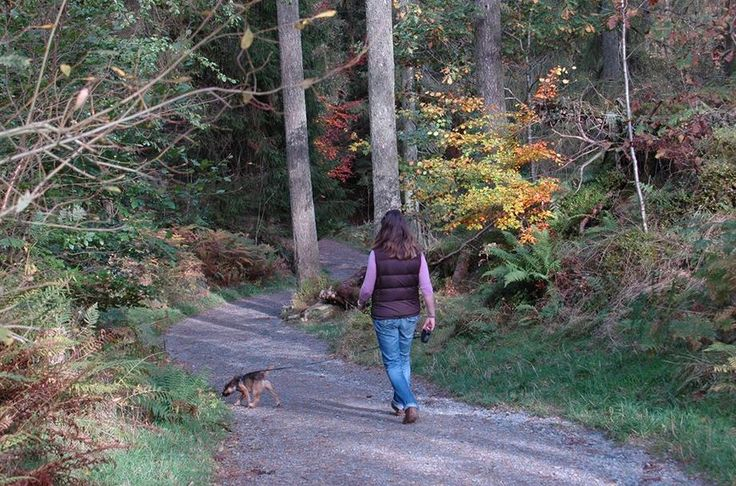 Walking at the famous Tarn Hows in Autumn.