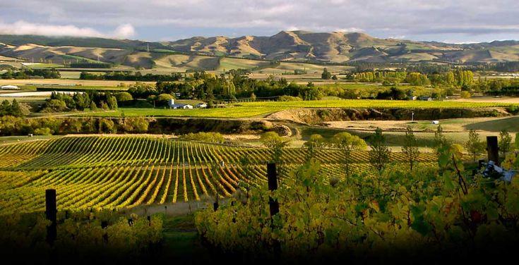 Greystone Wines  http://www.greystonewines.co.nz/