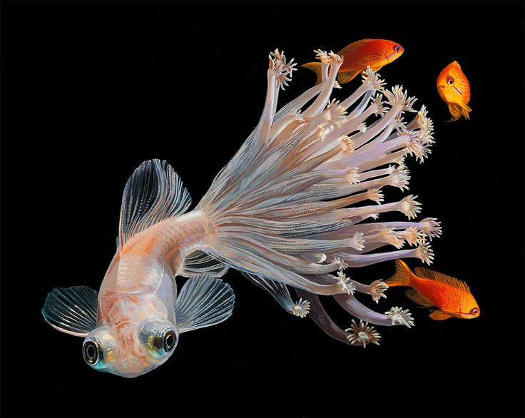 Lisa Ericson is an artist, illustrator and designer famous for creating hybrid, imaginary animals by combining different species.   In her latest series, she intertwines brightly colored fish with their rich coral environments.  More art on the grid via Fubiz