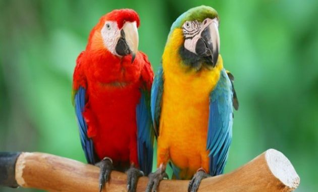 15 Amazing Animals That Start With Letter M Parrot Pet Bird Pet Birds