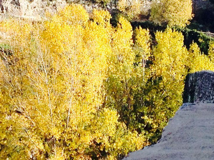 Los árboles en la sierra alicantina se llenan de oro sus hojas en otoño, fuente de inspiración para nuestros trabajos de mechas y reflejos dorados.