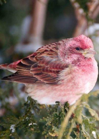 Amo passarinhos