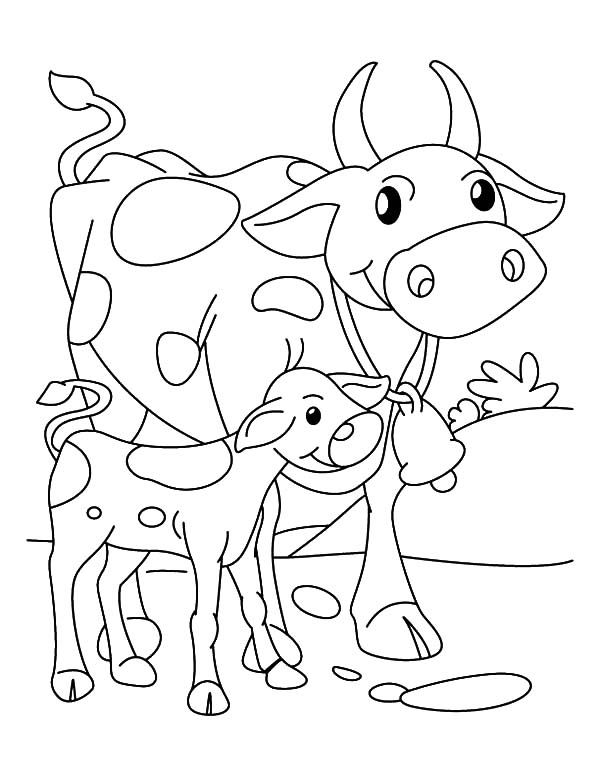 Cows Cows Walking Beside Her Calf Coloring Pages Cow Coloring