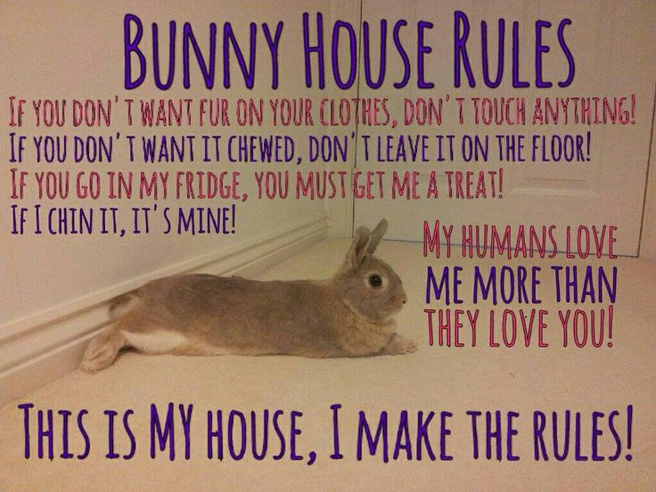 Bunny house rules :)this describes my mr.bixby to a tee