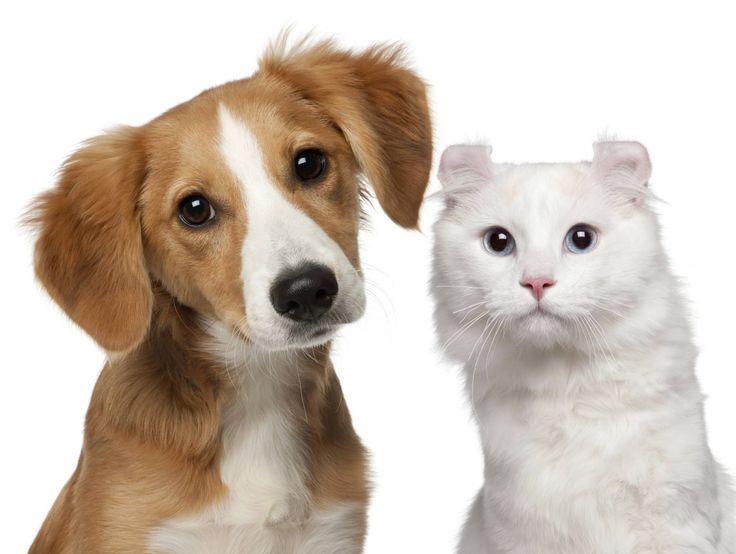 Evcil Hayvan Besleyenlerin Karşılaştıkları Sorunlar