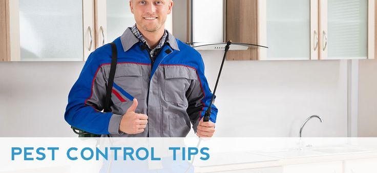 http://www.propestcontrolsydney.com.au/pest-control-tips/