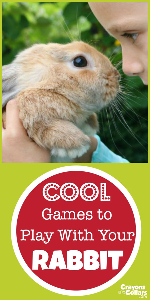 Cool Games to Play with Your Pet Rabbit