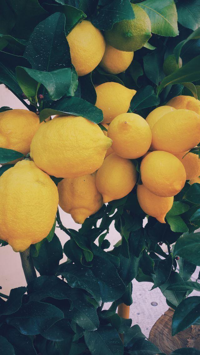 Lemon // wallpaper, backgrounds