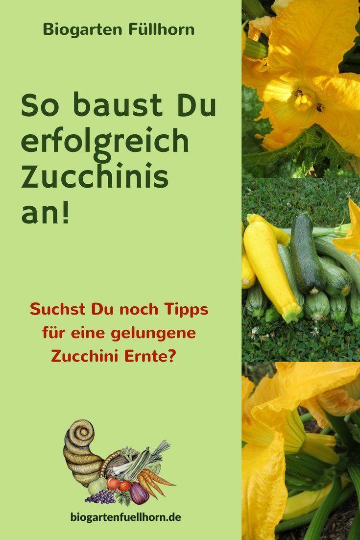 Erfolgreich Zucchini anbauen #garten #zucchini #selbstversorger