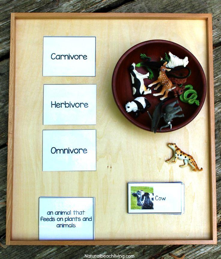 Montessori Science for Kids Animal Sort Activity & Printables, food chain, Hands on Activities for Preschool & Kindergarten, Omnivore, Herbivore, Carnivore