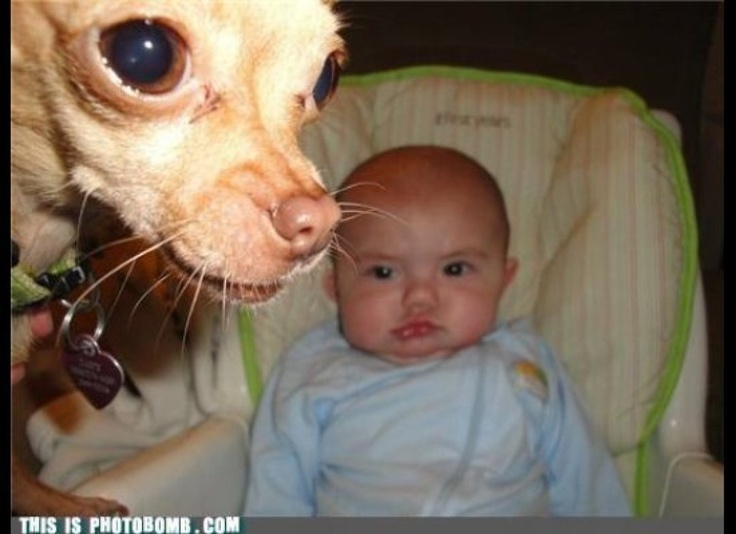 Best Animal Photo Bombs Images On Pinterest Cats Children - The 39 funniest animal photobombs of all time
