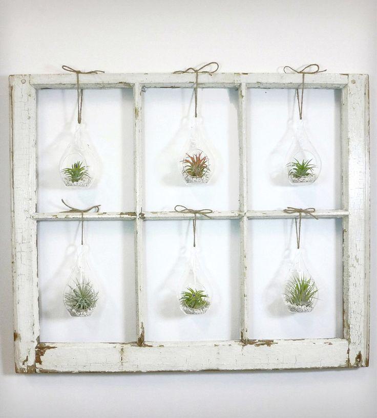 air plants window frame - Google Search