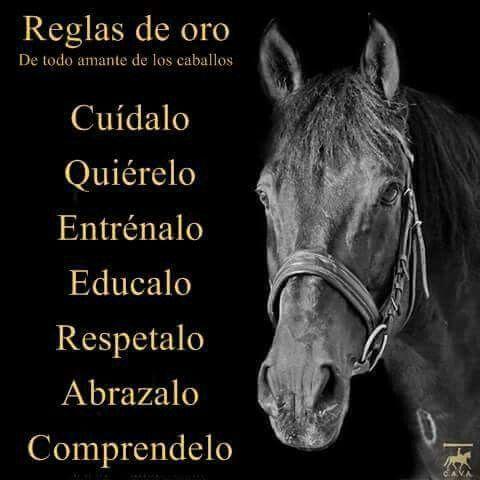 De todo amante de los caballos                                                                                                                                                     Más