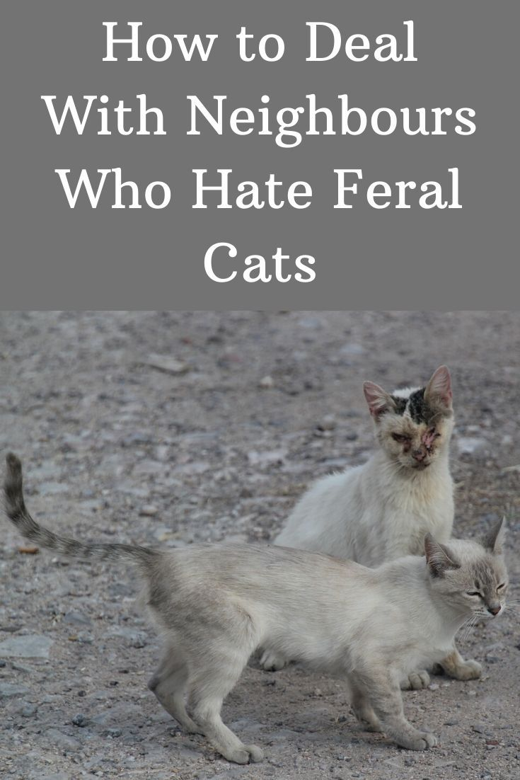 Pin On How To Help Feral Cats