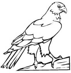 Falcon Coloring Pages Bird Coloring Pages Bird Pictures