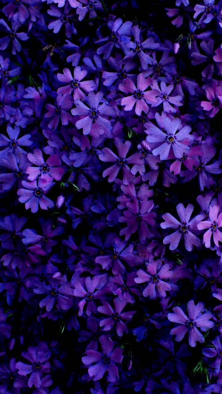 Background Purple Wallpaper Beautiful Backgrounds Flower Backgrounds