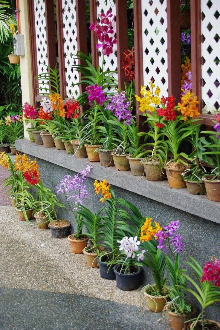 Orchid Growing Tips - Choosing, Watering, Repotting, Fertilizing and Maintenance Tips | http://whatwomenloves.blogspot.com/2014/05/orchid-growing-tips-choosing-watering.html