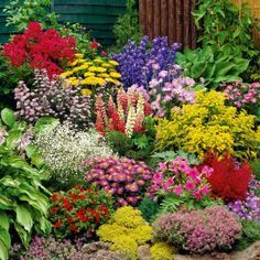 schöne Blumenstauden für den Garten