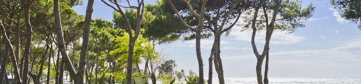 Bocche d'albegna Camping Toskana mit Hundestrand!!!