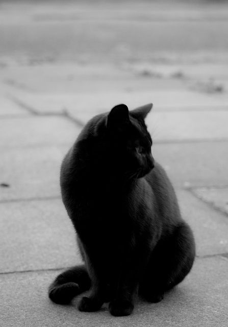 A beautiful black cat (but not as cute as my own)