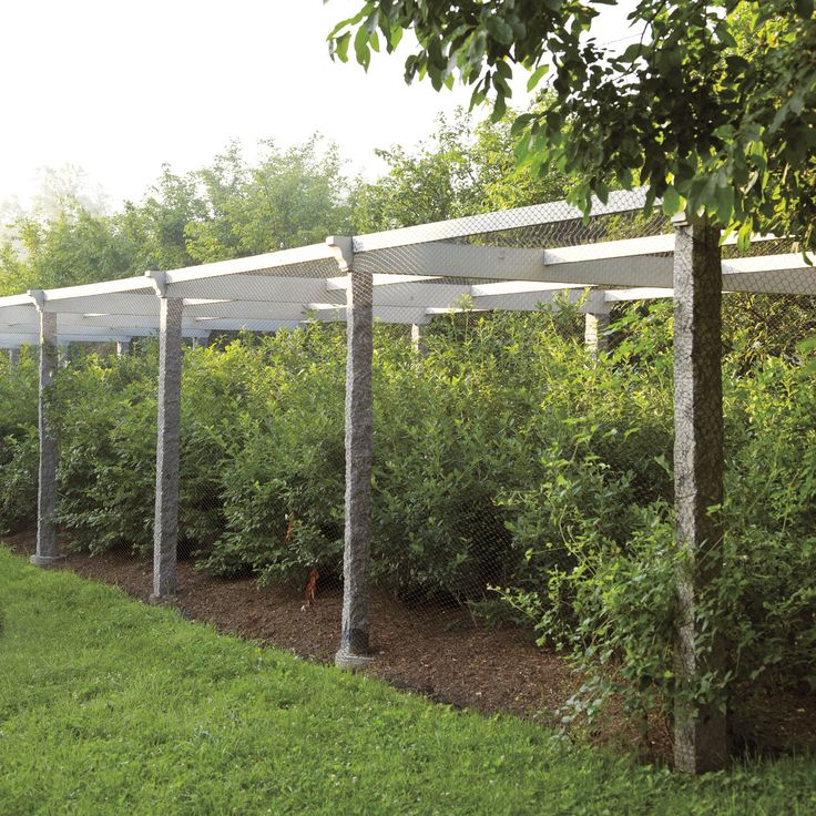 Best Fruit Cage Images Pinterest Vegetable Garden