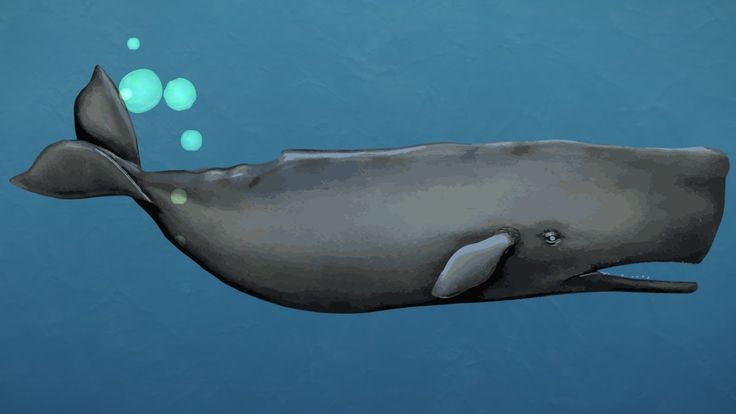 Fast facts about whales - AUCKLAND MUSEUM ANIMATION.