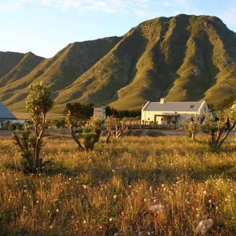 Alheit Vineyards in the Hemel en Aarde valley
