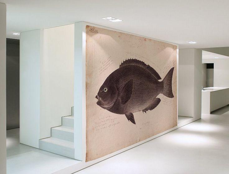 Kawahara Keiga's zwarte vis | Behang op maat | Naturalis Originals - Behang, muurposters en decoratie op basis van de natuurhistorische collectie van Naturalis Biodiversity Center.