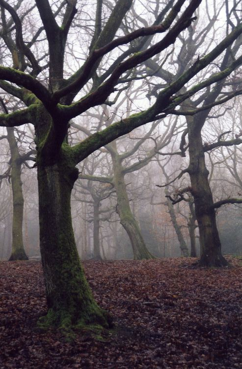 thackley woods fog (by M.J.S) Source: Flickr / m_j_s