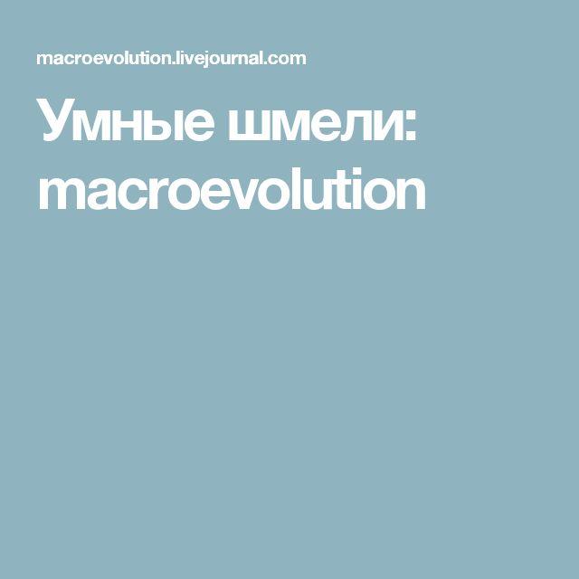 Умные шмели: macroevolution