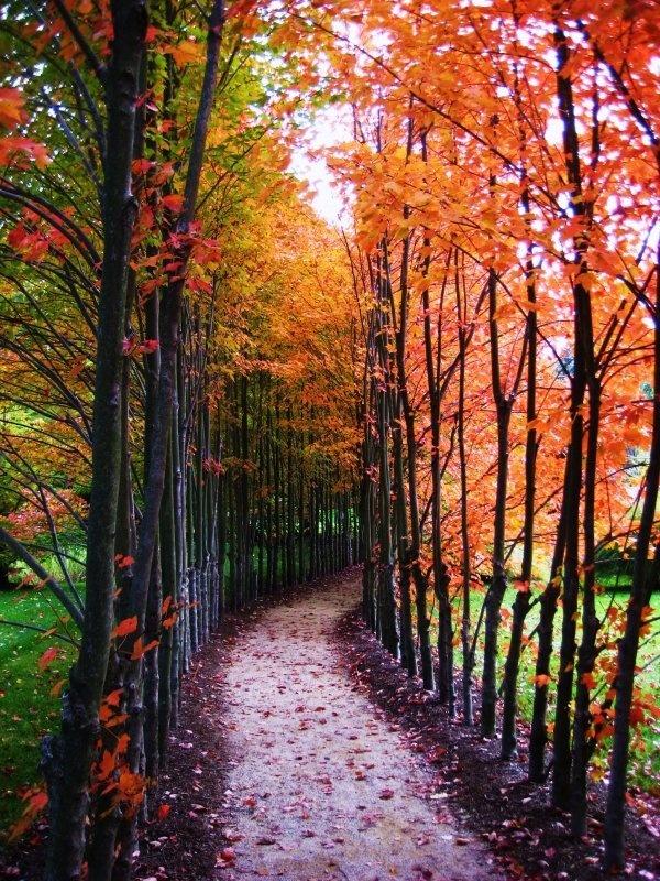 Beautiful fall weather! | Love IT! | Pinterest