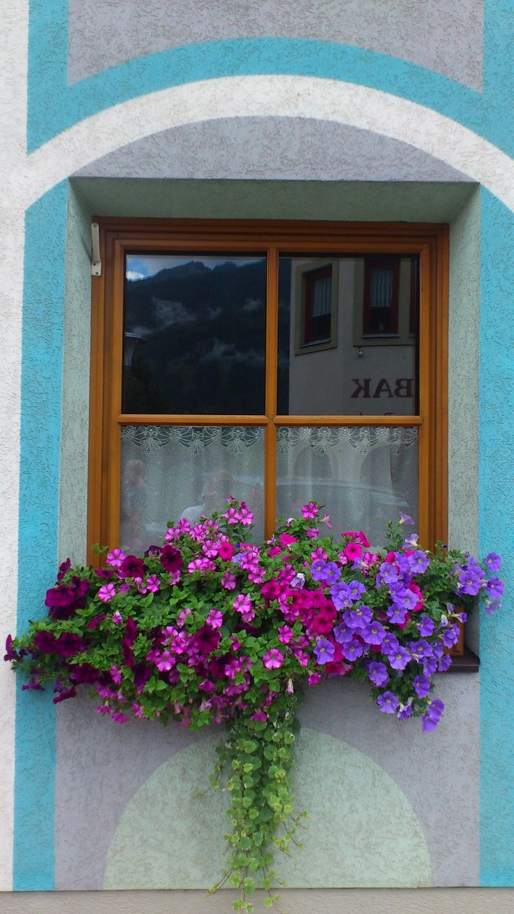 Vintage wooden window frame with curtain and flowerpot stock - Nice Beautiful Arrangement For A Wooden Window Box Love The Colors