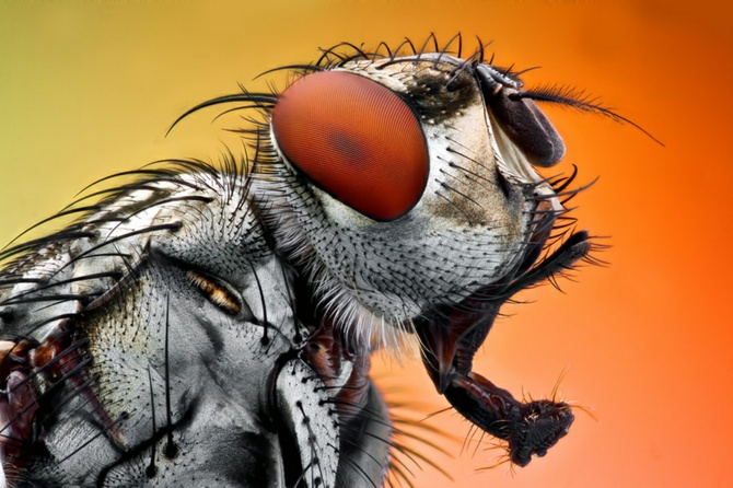 xAmazing Insects, Omid Golzar, Awesome Insects, Macro Photography, Insects Macro, Inspiration Photography, A Bugs Life, Macro Insects, Photography Inspiration