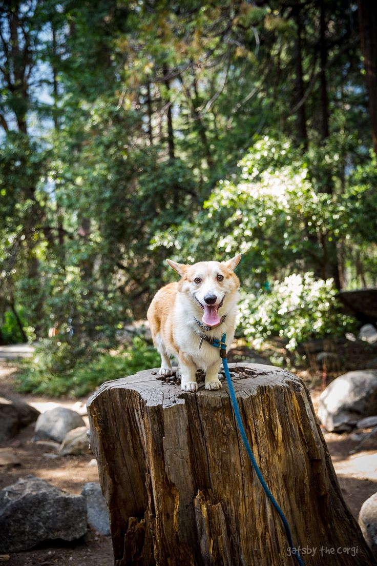 gatsbyadventures:   Stump(s) squared. - The Corg Collective