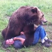 Grizzly Bear Attacks MAN!!