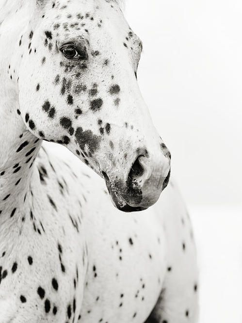 Spots Print By Stephanie Moon