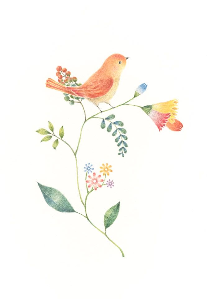 """Little Orange Bird and Flowers"" −RiLi, picture book, illustration, design ___ ""橙色の小鳥と草花"" −リリ, 絵本, イラスト, デザイン ...... #illustration #bird #orange #flower #イラスト #鳥 #橙 #花"