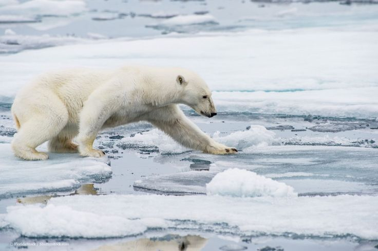 Five surprising effects of Arctic climate change – WWF – Medium