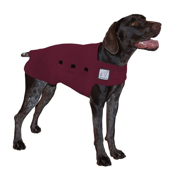 Burgundy Maroon German Shorthaired Pointer GSP Dog Tummy Warmer, great for warmth, anxiety and laying with our dog rain coat. High performance material. Made in the USA.